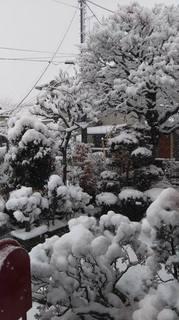 180122我が家の庭.jpg